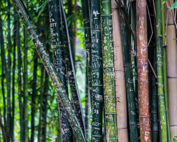 A paciência do bambu