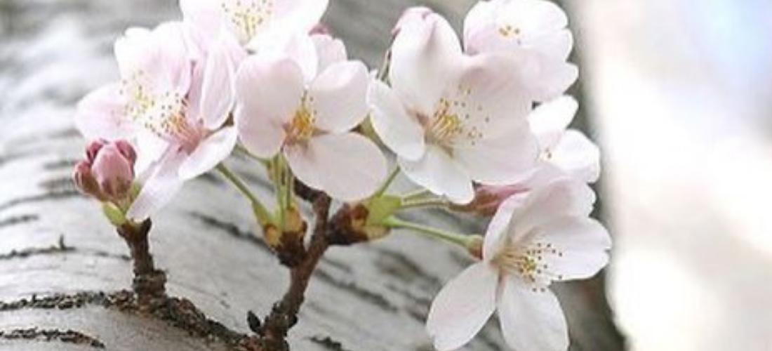O irresistível charme das flores